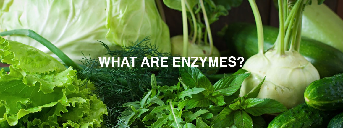 WhatAreEnzymes_Banner_1160x435